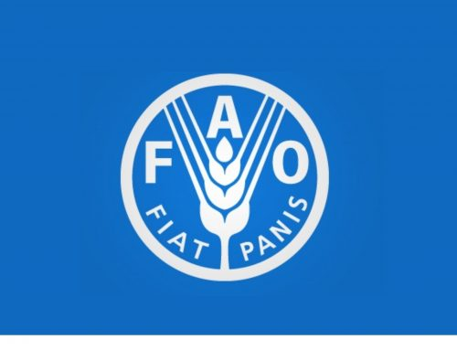 Prácticas en la Food and Agriculture Organization (FAO)