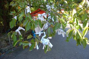 a wish tree | hearts and hands